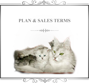 PLAN & SALES TERMS